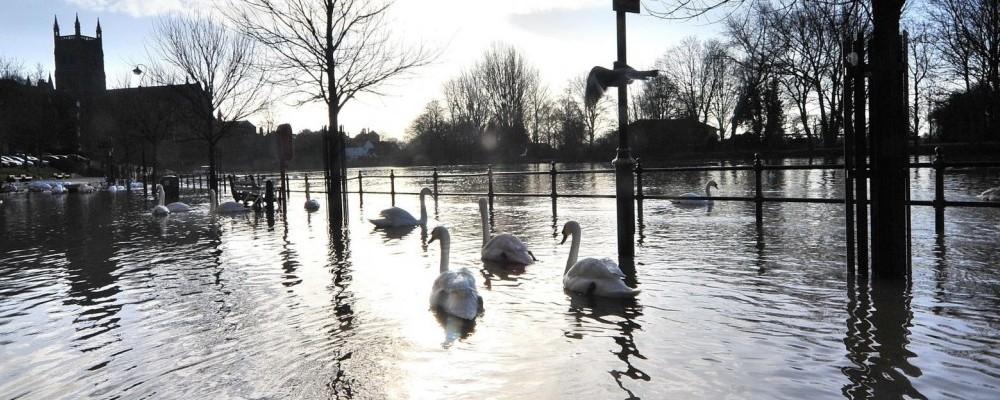 Swans-Slider